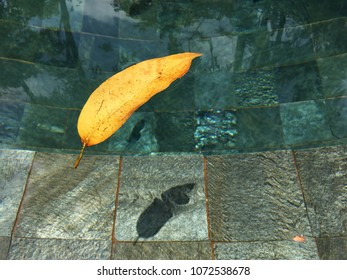 Floating leaf of a tree on a surface of transparent water in a pool