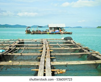 Floating net baskets in the sea
