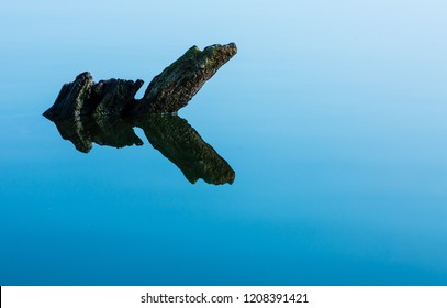 floating root in the lake