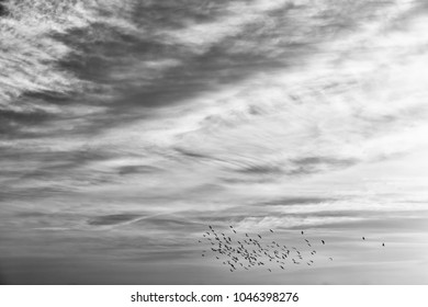 flock of birds in the clear sky near the  sunset light and cloud