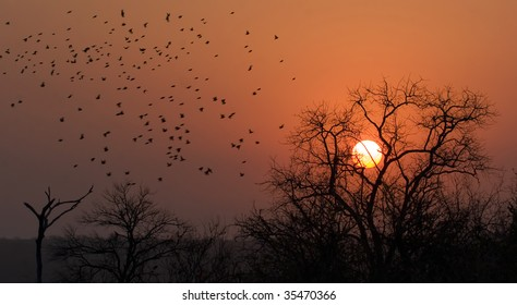 Flock of birds during sunset in Kruger Park