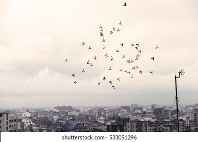 Flock Of Birds flying.
