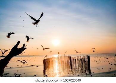 a flock of birds flying above the sea