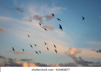 Flock of birds flying across a fiery sunset sky