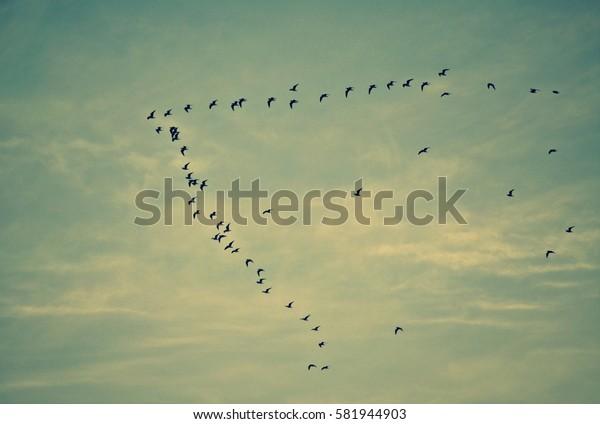 Flock of birds flying high in the sky