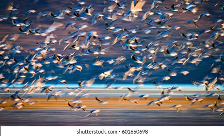 Flock of birds is flying. Flying birds in nature. Abstract Motion Blur Background