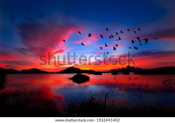 flock of birds flying wallpaper mural