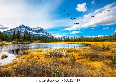 Flock of birds flying over the autumn valley. Waterlogged valley in the Canadian Rockies. The concept of an active and eco-tourism