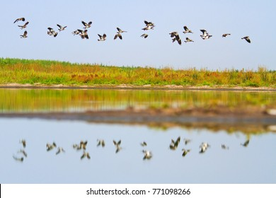 flock of birds flying over the mirror of the lake
