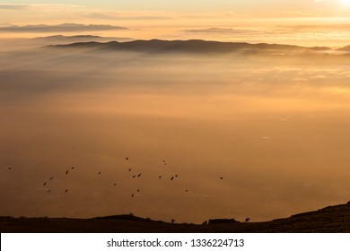 Flock of birds flying over a sea of mist at sunset