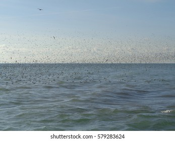 Flock of birds flying over the sea and on the water