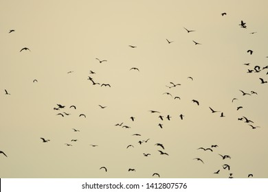 Flock of birds flying in the sky .