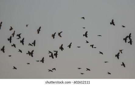 Flock of birds flying in Tres Rios Wetlands, Phoenix Arizona