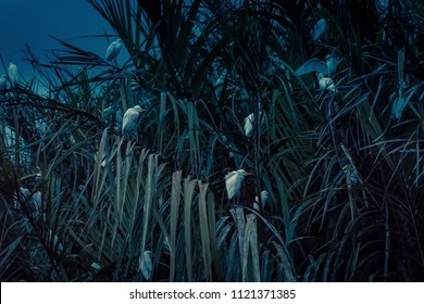 A flock of birds in the lagoon at night near Tangalle, Sri Lanka. White birds sit in tropical thickets. Birds sleep in the rainforest.