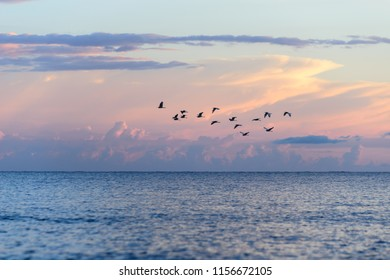 Flock of birds leaving by the end of the summer
