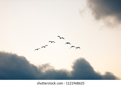 Flock of birds in morning sky