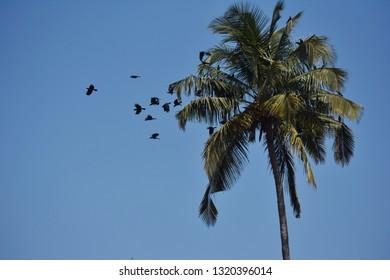 A flock of birds on a cocnut tree
