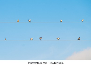 Flock of birds relaxing near cables in south of Thailand.