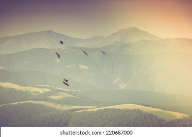 Flock of birds soaring in the mountains. Autumn landscape.Filtered image:cross processed vintage effect.