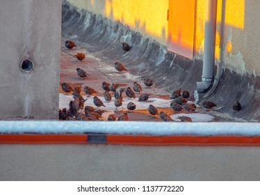 flock of birds standing on the roof in the winter