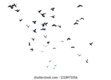 Flock of birds, white background