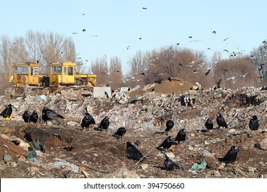 A flock of black crows on a city garbage dump. Dozers, poor people and crows dig in the mountains of human waste.