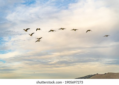 A flock of Canadian geese are flying in the sky with clouds on the background.