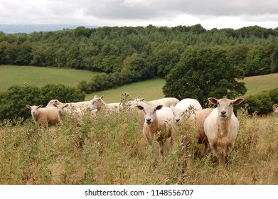 Welsh Countryside Images, Stock Photos & Vectors | Shutterstock