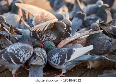 Flock of colorful urban pigeons sitting on bench in park. Doves peeking grain on ground, close up.