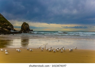 Flock of cormorants resting on the beach. Cannibal Bay on the South Island, New Zealand. Wide beach with white sand and blue-green water. The concept of ecological, active and phototourism