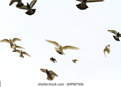 flock of doves flying in the forehead,light, mail delivery, peace on earth