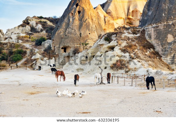 Flock of ducks and horses on cave houses in mountains background. Goreme. Cappadocia. Nevsehir Province. Turkey