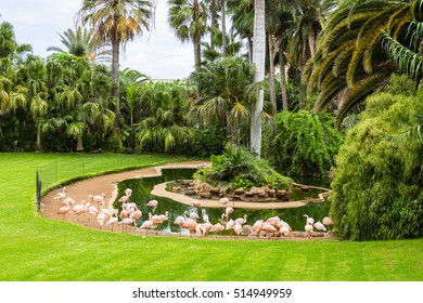Flock of flamingo birds is grazing on the grass of Loro Park in Puerto de la Cruz, Tenerife, Canary Islands, Spain.
