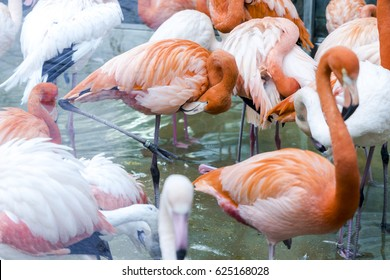 flock of flamingos in a pond.