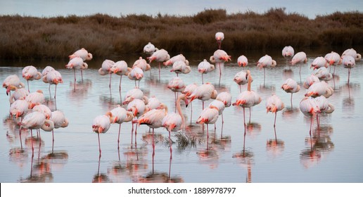 flock of flamingos in their natural ecosystem