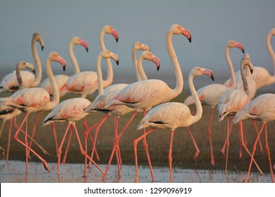 Flock of Flamingos. These colourful birds are bliss to eyes