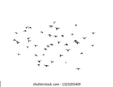 A flock of flying birds in the sky