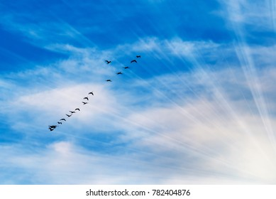 Flock of flying in a flying on a beautiful sky with clouds