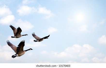 Flock of Geese flying, with a bright background.