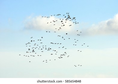 A flock of geese flying in the cloudy sky.
