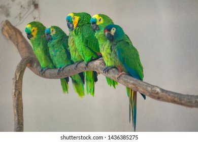 flock of green parrots standing together on the branch