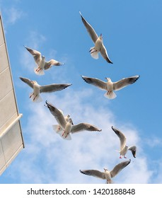 A flock of gulls flying in a port town in the Seto Inland Sea