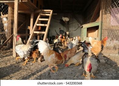 en House Images, Stock Photos & Vectors | Shutterstock on