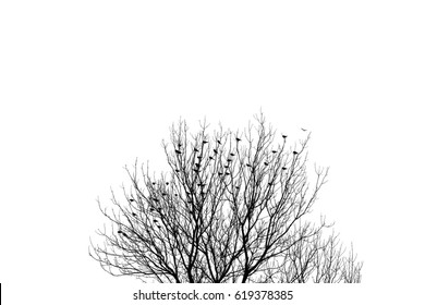 flock of many birds sitting on branches of a barren tree, contrasting silhouette against white sky.
