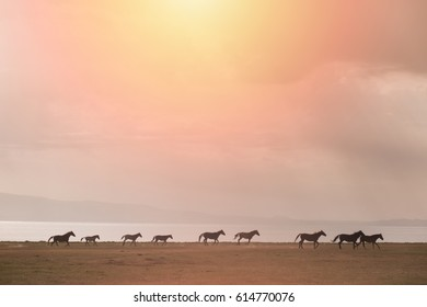 Flock of nomadic wild horses is grazing in a meadow in Song Kol Lake, Kyrgyzstan. Bright sunlight at sunset.