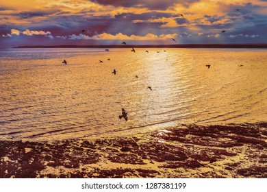 Flock of pigeons fly over Sandwich and Pegwell Bay in Ramsgate, Kent, UK at sunset  at low tide as the sea ripples into the shore. St Margarets Bay can be seem on the horizon.