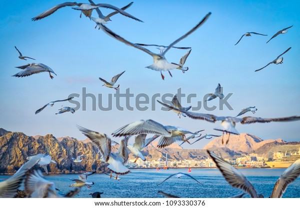 flock-pigeons-flying-away-sky-600w-10933