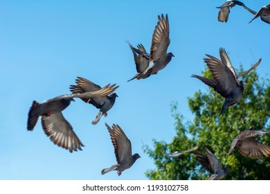 flock of pigeons flying over the street