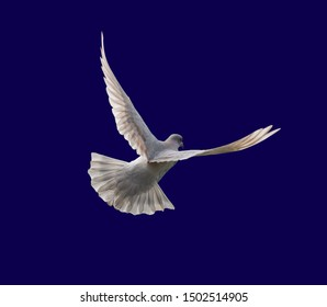 Flock of pigeons flying in the white background