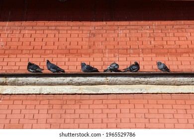 a flock of pigeons sits on the parapet of a red brick building
